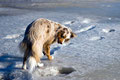 30.01.2012 - Foxi testet den Eis