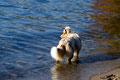 01.11.2011 - Foxi im Langen See