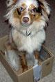 "18.11.2011 - Foxi macht ""Box"""