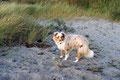 14.10.2011 - Foxi am Strand bei Dranske