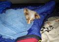 Im Zelt ist es kalt