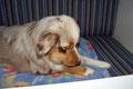 02.09.2011 - Zwei Stunden nach der Tierarzt-Behandlung