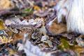 01.11.2011 - Begegnung mit einem Frosch