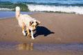 15.10.2011 - Am Strand bei Nonnenwitz