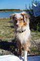 24.09.2011 - Nach dem Baden. Foxi will auf das Strandlaken, darf sie aber nicht...