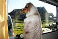 16.10.2011 - Foxi schaut aus dem Fenster
