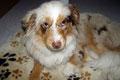 02.09.2011 - Eine Stunde nach der Tierarzt-Behandlung