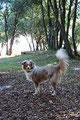 20.09.2011 - Foxi und ihre schöne Rute