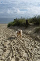 02.09.2011 - Sand-Tarnfarben, man sieht Foxi kaum...