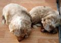 Foxi (rechts) mit ihrer Schwester Felicity