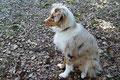 20.09.2011 - Foxi sitzt und wartet erwartungsvoll...:-)