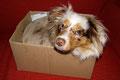 21.11.2011 - Platzsparender Hund - Box+Platz= Paket