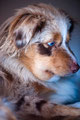 03.09.2011 - geschwollene Foxi am nächsten Tag