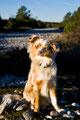 16.10.2011 - Foxi in der Abendsonne