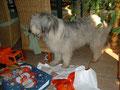 Das erste Bild von Djana;sie zog am 23.12.2006 bei uns ein.