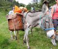 Randonnées avec des ânes(Capcir/Pyrénées orientales); Ingrid Sparbier, guide du Pays Cathare