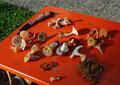 Pilze sammeln und bestimmen