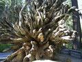 Redwoods - Yosemte Nt. Park