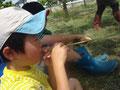 葦の新芽で草笛~♪