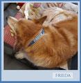 3. Halsband für Frieda seit 2013