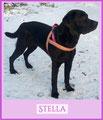 Pink Labbilady Stella