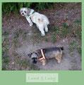 Luna und Luzy tragen Reflexgeschirre