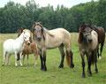 Fiana, Franja, Marylin, Ronja (dahinter Rosie und Filou)