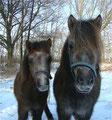 Verblüffende Ähnlichkeit unter Fast-Vollgeschwistern (Gianno und Franja)