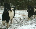 Powerponies Samurei und Willi
