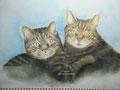 Katten - pastelpotlood op papier - 31,5x23cm - jan.2016 - niet te koop