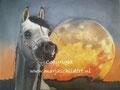 Paard - olieverf op canvas - 60x45cm - dec.2016 - origineel niet te koop - repro