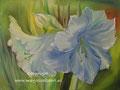 Amaryllis - olieverf op canvas - 30x24cm - april 2014 - te koop