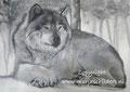 Wolf - olieverf op canvas - 45x60,5cm - sept.2016 - te koop 150 euro
