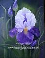Iris - olieverf op canvas - 40x50cm - febr.2016 - te koop 75 euro
