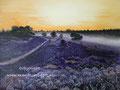 Heide - olieverf op canvas - 32x24cm - aug.2016 - te koop