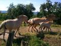 ALTE BUX: ideales Quartier für Pferdeliebhaber