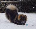 Caesar im Januar 2015 im Schnee