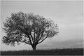 Baum / Christen Margrit