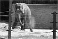 spielender Elefant / Christen Margrit