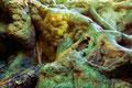 Am Fuße der Bad Uracher Wasserfälle verläuft der Brühlbach der zurzeit ausgetrocknet ist.   Daraus ergeben sich sehr schöne Strukturen, und schöne Farbverläufe.