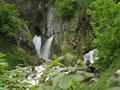Dachserfall in Abtenau