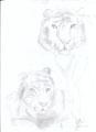 """""""Weißer Tiger"""" von Elena B."""