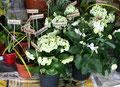 Blumen und Pflanzen in der Pfalz