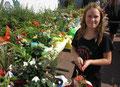 Pfälzer Blumen und Pflanzen