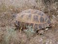 Торстен Хардер, 19.05.2005, Озера Айдаркул, Узбекистан