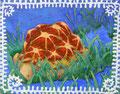「泳ぐ亀」和紙に岩絵具、色鉛筆 14cm×18cm