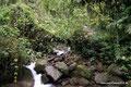 Costa Rica_Tapanti NP_Regenwasser