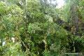 Chile_Cochamó_Valle de Cochamó_Unterwegs im Valdivianischen Regenwald5