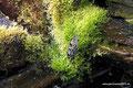 Kanada_Neufundland_Deer Lake_Insectarium_Schmetterling3