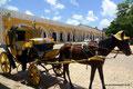 Mexiko_Yucatán Halbinsel_Izamal_Pferd mit Hut